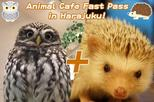 Animal Cafe Fast Pass in Harajuku! (Popular Owl Cafe and Hedgehog Cafe)