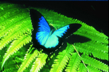Australian Butterfly Sanctuary, Cairns & the Tropical North, Attraction Tickets
