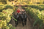 Wine Country Tour by Horse and Carriage, Napa & Sonoma,