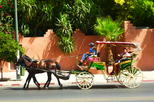 Horse Carriage Ride with Majorelle Garden
