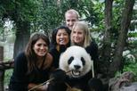 Half-Day Chengdu Panda Breeding Center Tour with Optional Baby Panda Holding, Chengdu, Half-day ...