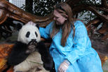 Viator Exclusive: Volunteer at Panda Breeding Center with Optional Panda Holding
