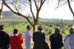 Guided Olive Mill Tour and Olive Oil Tasting with Food Pairings