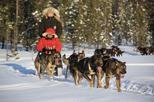 Husky Sled Drive and Ride Combo Tour from Kiruna
