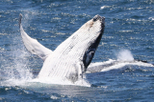 Small-Group Jervis Bay Whale-Watching Cruise and South Coast Day Trip from Sydney, Sydney, Dolphin ...