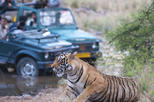 2-Night Private Ranthambore National Park and Wildlife Tour from Delhi