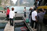 Cat Ba Cooking Class Go to Market with Seafood from Cat Ba Town