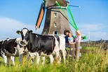 Europe - Netherlands: Dutch Windmills and Countryside Day Trip from Amsterdam Including Cheese Tasting in Volendam