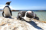Africa & Mid East - South Africa: Full-Day Cape Peninsula, Penguins and Constantia Valley Tour from Cape Town