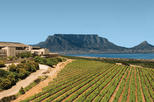 Africa & Mid East - South Africa: Full-Day Durbanville Valley Private Wine Tasting Tour from Cape Town