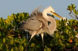 Small-Group Everglades National Park Tour: Bird Watching and Photography, Fort Myers,