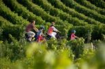 Small-Group St-Emilion Bike Tour from Bordeaux Including Wine Tastings and Lunch, Bordeaux,