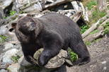 Fortress of the Bear Private Tour in Sitka