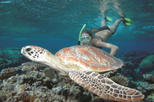 Great Barrier Reef Sailing and Snorkeling Cruise from Port Douglas, Port Douglas,