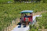 Half-Day Horse-Drawn Trolley Shuttle to Temecula Wineries