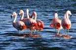 Bull Lagoon and Flamingo-Watching 4x4 Tour from Salta