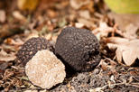 FLAVOURS OF COUNTRYSIDE WITH TRUFFLE TASTE from Umag Novigrad Rovinj Pula Meduli