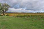 Small-Group McLaren Vale Food and Wine Tour from Adelaide