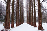 Winter Sonata TV Tour on Nami Island from Seoul