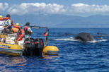 Azores Whale Watching Expedition Tour