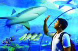 Cairns Aquarium Admission Ticket