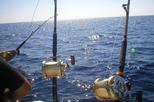 Deep Sea Fishing in Ensenada