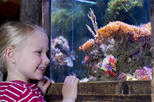 Skip the Line: SEA LIFE Oberhausen Admission Ticket