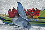 Zodiac whale watching adventure in victoria in victoria 208976