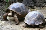 5-Night Galapagos Tour from Quito including 3-Night Yacht Cruise on the 'Queen Beatritz'