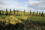 3-Day Tuscany and Cinque Terre Experience with Limoncino Tasting