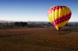 Sonoma Valley Hot Air Balloon Ride with Gourmet Champagne Brunch, Napa & Sonoma,