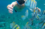 Snorkeling by Glass Bottom Boat (Starting at Cancun, Pto Morelos or Pl del Carm)