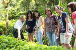 Live Guided Tour Ticket of Tropical Spice Garden