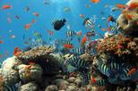 SNORKELING AND FISHING TO THE SOUTH PHU QUOC