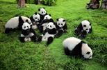 Chengdu Private Day Tour to Panda Base Wenshu Monastery and People's Park