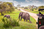 3 Day Fly-in Safari Tour to Ruaha National Park from Dar es Salaam