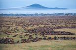 3 Day Fly-in Safari Tour to Serengeti National Park