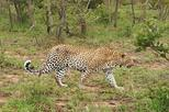 Around Zimbabwe 12 Days Mobile Safaris