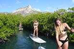 Guided paddleboarding (SUP) mangrove ECO tour for beginners
