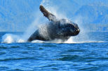 Beautiful Sitka Marine Wildlife Photo Tour
