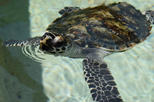 2 Hour Turtle Encounter at Beachhcomber