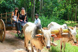 02 Days Private Dambulla & Habarana Tour With Village Experience From Colombo