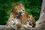 Day Excursions To Yala National Park Form Galle
