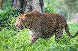 Private Day Tour To Pinnawala Open Zoo From Bentota