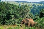 Shimba hills full day tour from Mombasa or Diani beach