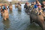 Amazing-Tour in Chitwan National Park From Kathmandu,Nepal