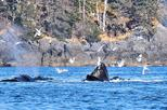 Amazing Whale Watching and Marine Wildlife Shore Excursion