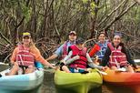 Mangrove Tunnel Kayak Tour