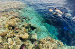 Egyptian Snorkel Day Trip from Sharm el Sheikh