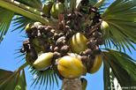 Full Day Discovery Tour of Vallee de Mai and Anse Lazio on Praslin Island
